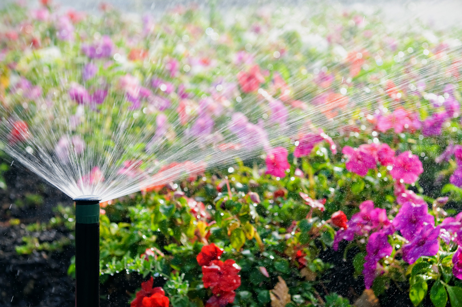 Why Use a Rain and Freeze Sensor on your Sprinkler System?