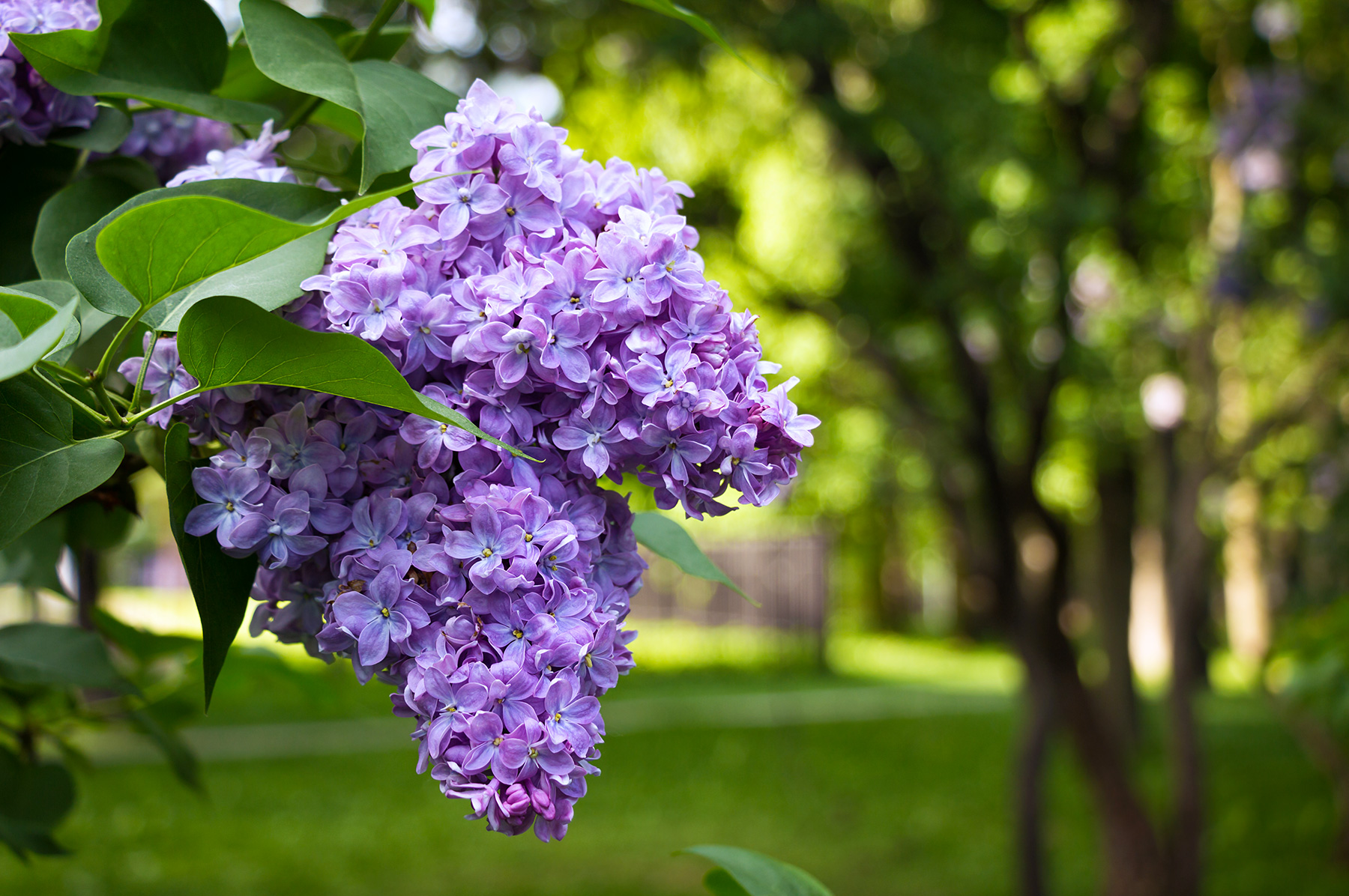 The Color Purple – What does it mean in the Landscape World